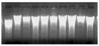 土壤DNA提取试剂盒 来自mpbio公司