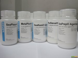 LONZA分子生物学产品目录