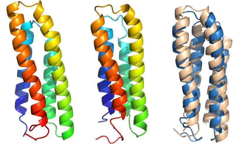 细胞膜蛋白 新方法关闭线粒体酶 可抑制肿瘤生长